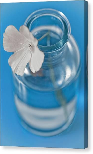 Little Flower In A Vase Canvas Print by Frank Tschakert