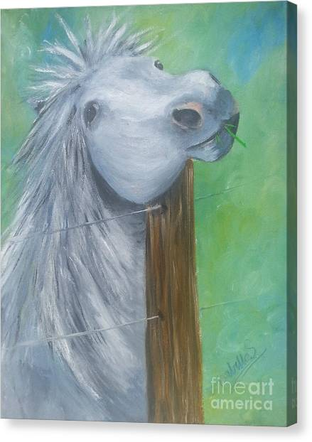 Little Grey Has An Itch Canvas Print