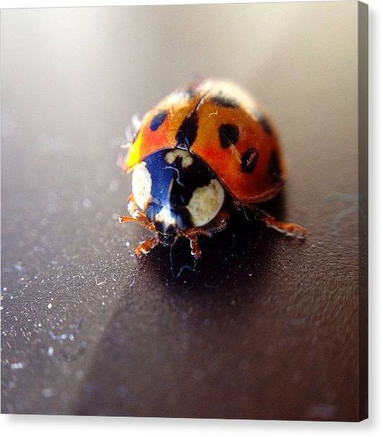 Ladybugs Canvas Print - Little Lady by Michael Gonzalez