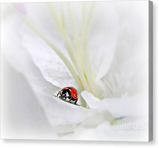 Little Ladybug Canvas Print