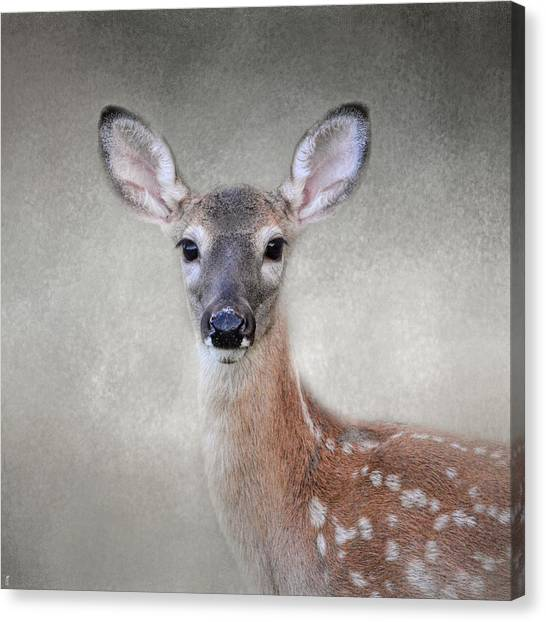 Little Miss Lashes - White Tailed Deer - Fawn Canvas Print