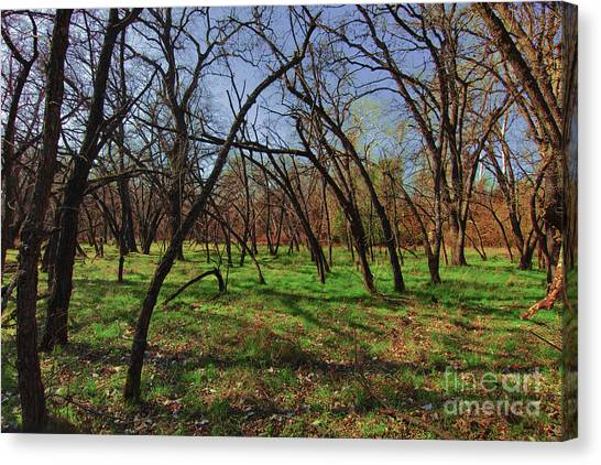 Little Oaks Canvas Print by David Taylor