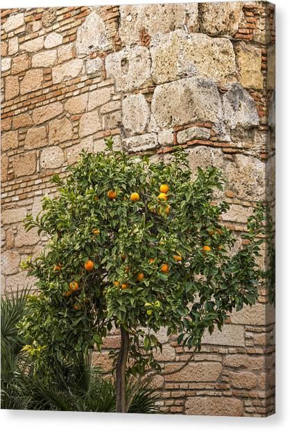 Orange Tree Canvas Print - Little Orangetree by Lutz Baar