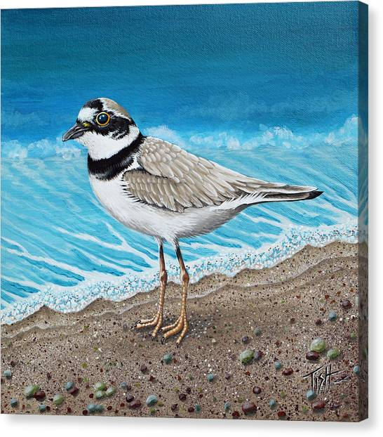 Little Plover Canvas Print