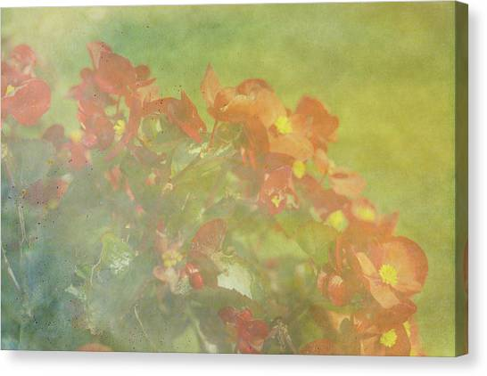 Little Red Beauties Canvas Print
