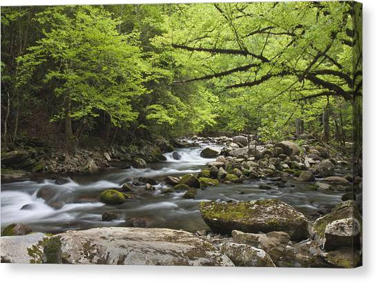 Little River Respite Canvas Print