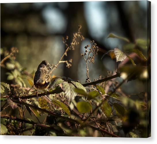 Brown Towhee Canvas Print - Little Sharp Eyed Bird by Belinda Greb