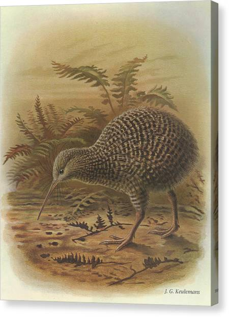 Kiwis Canvas Print - Little Spotted Kiwi by Dreyer Wildlife Print Collections