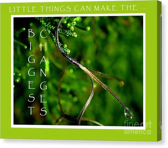 Little Things Canvas Print - Little Things by Pamela Blizzard