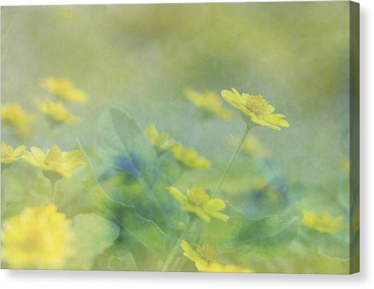 Little Yellow Beauties Canvas Print