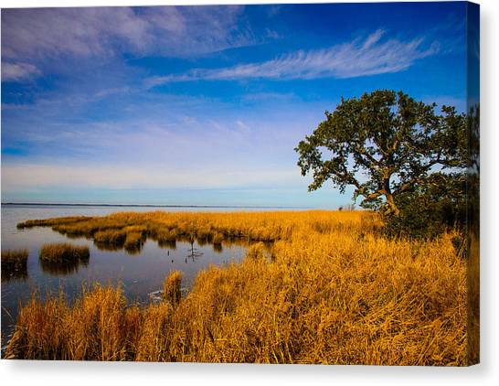 Live Oak By The Sound Canvas Print