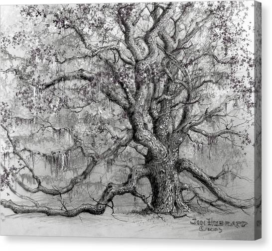 Live Oak Canvas Print