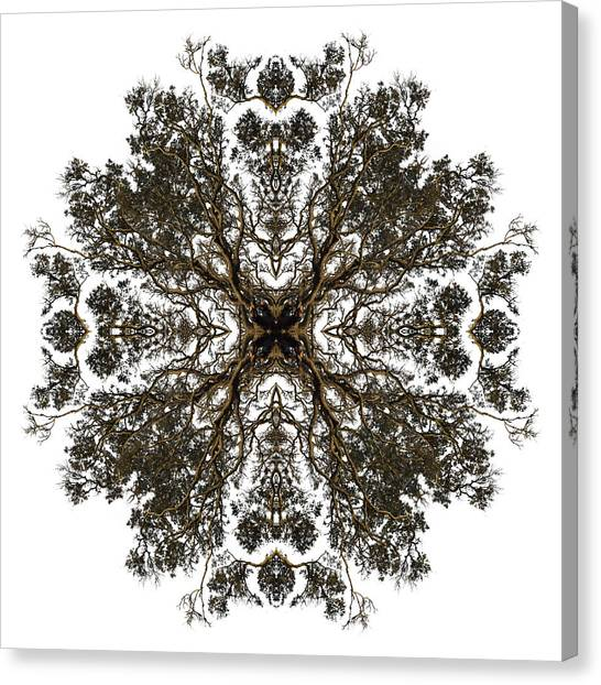 Tropical Stain Glass Canvas Print - Live Oak Lace by Debra and Dave Vanderlaan