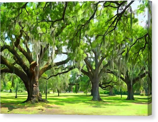 Live Oaks - Audubon Park New Orleeans Canvas Print
