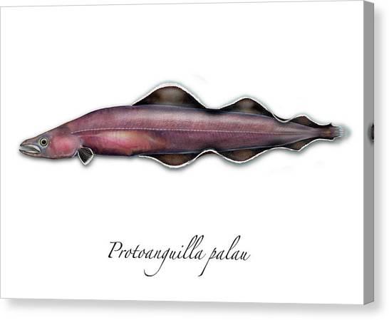Living Fossil Eel - Protoanguilla Palau Canvas Print
