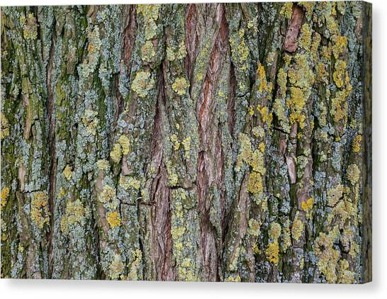 Living Tree Canvas Print