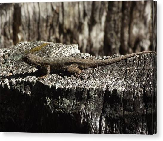 Lizard In Thought Canvas Print by James Rishel