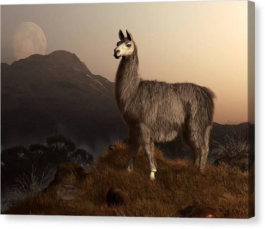 Llamas Canvas Print - Llama Dawn by Daniel Eskridge