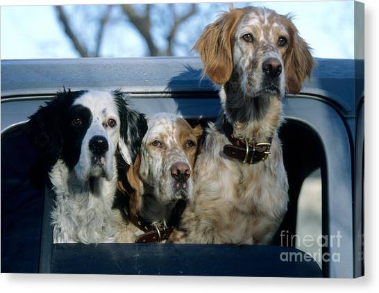 Three Pointer Canvas Print - Llewellyn Setters by William H. Mullins