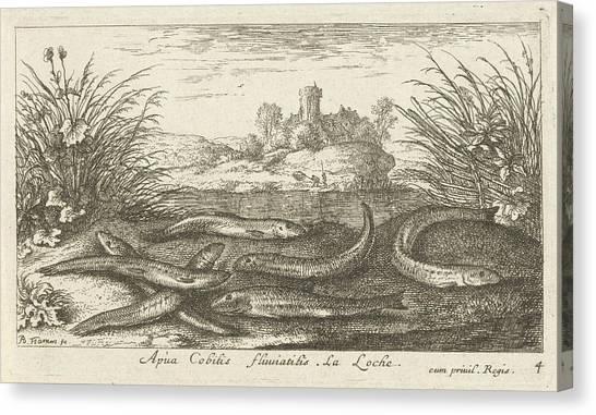Loaches On A River Bank, Albert Flamen Canvas Print by Albert Flamen