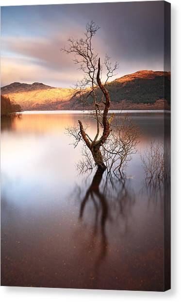 Loch Lomond Tree Canvas Print