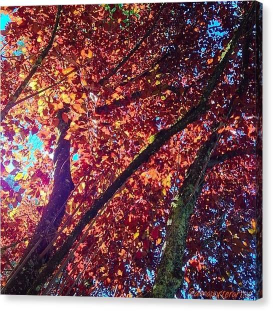 Autumn Leaves Canvas Print - Lofty Heights by Anna Porter