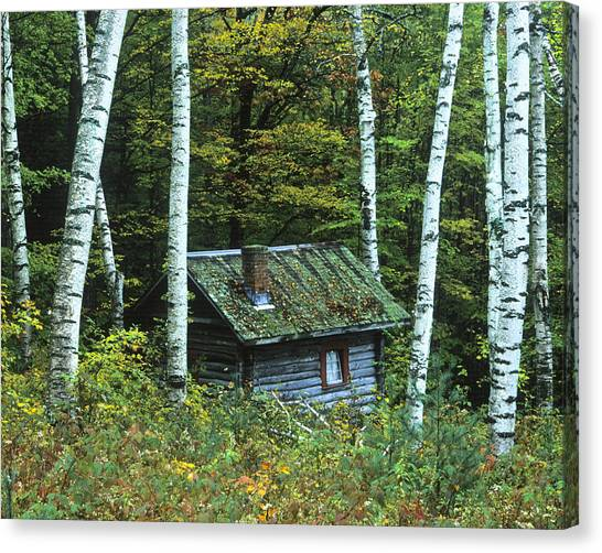 Log Cabin In The Birch Forest Vermont Canvas Print