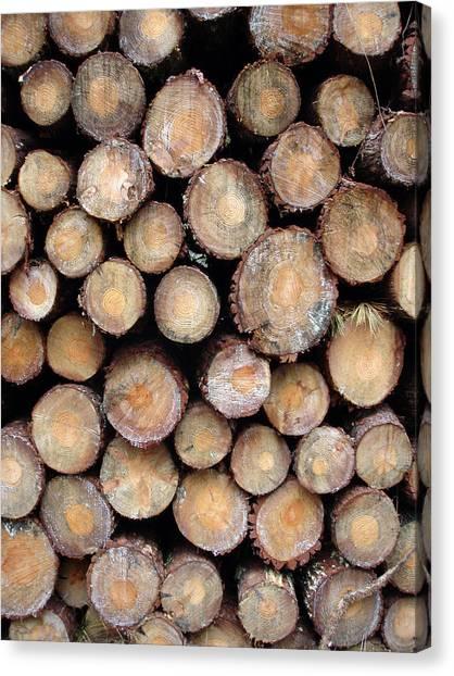 Logs Faces Canvas Print by Michel Mata