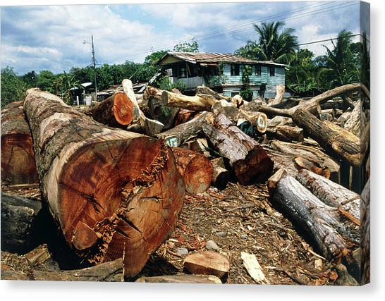 Tropical Rainforests Canvas Print - Logs From A Rainforest Piled Up At A Sawmill by William Ervin/science Photo Library