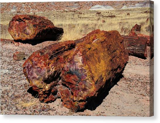 Petrified Forest Canvas Print - Logs, Petrified Forest National Park by Michel Hersen