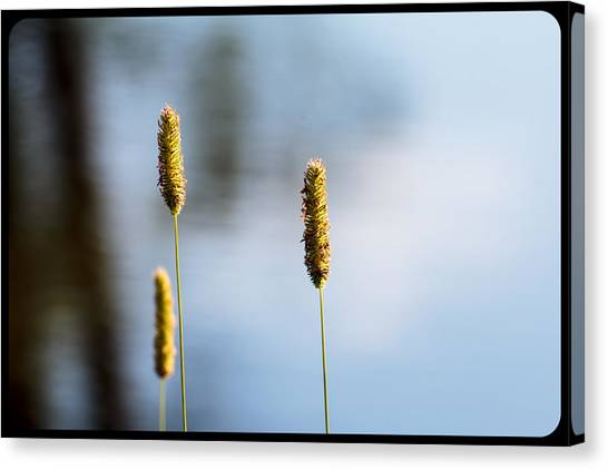 Lone Buds Canvas Print