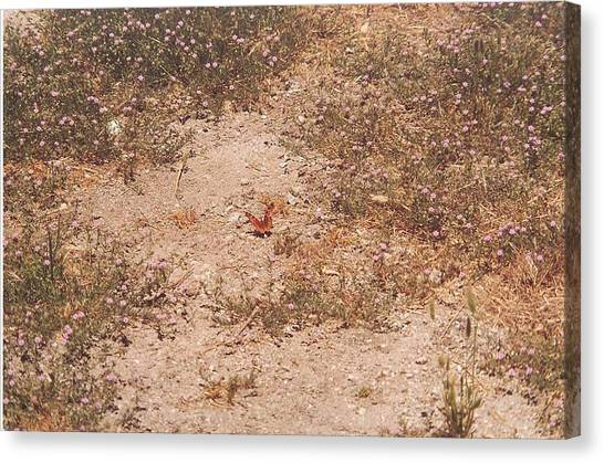 Lone Butterfly Canvas Print