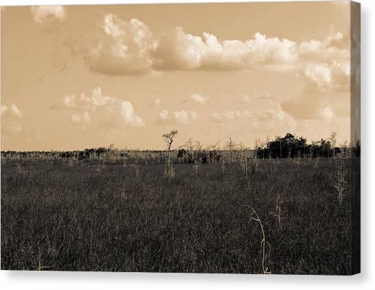 Lone Cypress Canvas Print