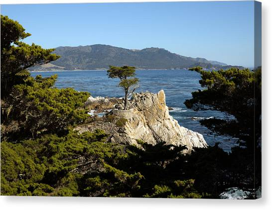 Lone Cypress On 17-mile Drive  Canvas Print