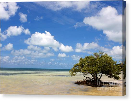 Lone Mangrove Tree Florida Keys Canvas Print