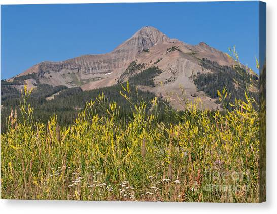 Lone Mountain And Wildflowers Canvas Print