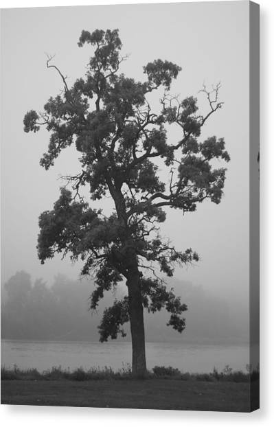 Canvas Print featuring the photograph Lone Oak by Viviana  Nadowski