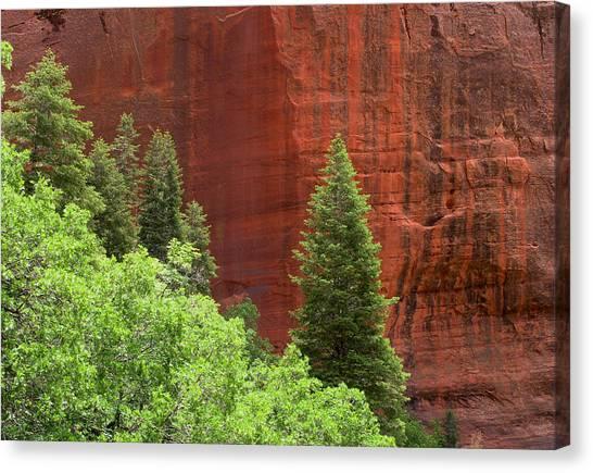 Lone Pine At Kolab Canvas Print