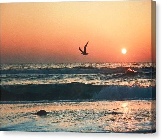 Lone Seagull Sunset Flight Canvas Print