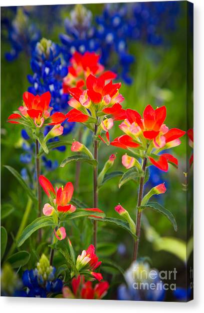 Lone Star Blooms Canvas Print