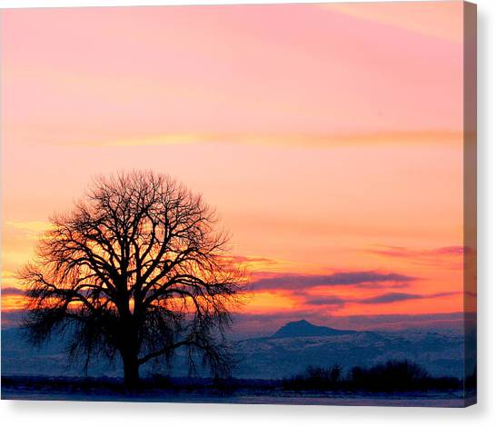 Lone Tree 1 Canvas Print by Rebecca Adams