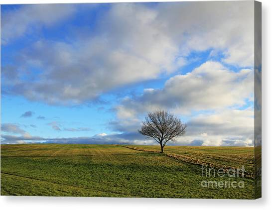 Lone Tree At Epsom Downs Uk Canvas Print