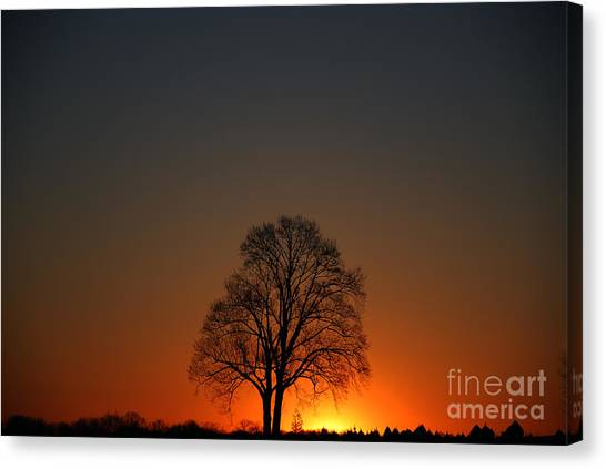 Lone Tree At Sunrise Canvas Print