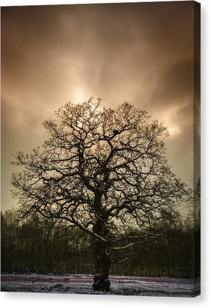 Snowed Trees Canvas Print - Lone Tree by Amanda Elwell