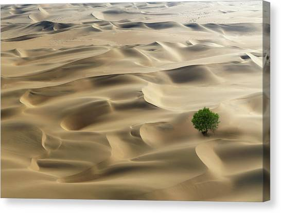 Lone Tree In A Desert Canvas Print by Buena Vista Images