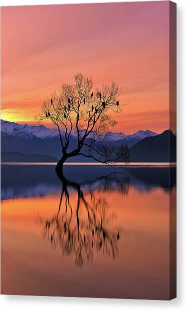 Lone Tree Is Not Lonely Canvas Print by Mei Xu
