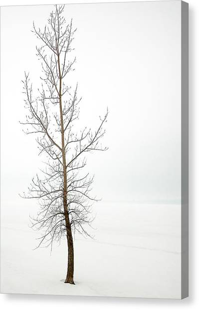 Lone Tree On The Ottawa River Shoreline Canvas Print