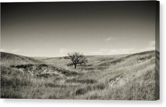 Lone Tree Winter Canvas Print