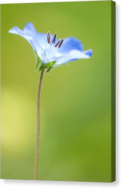 Lone Wildflower Canvas Print by Bill LITTELL