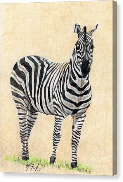 Lone Zebra Canvas Print